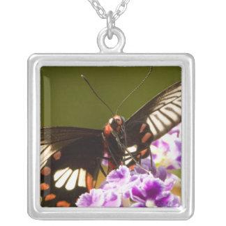 SE Asia, Thailand, Doi Inthanon, Papilio polytes 2 Silver Plated Necklace