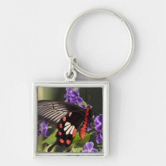 SE Asia, Thailand, Doi Inthanon, Papilio polytes 3 Silver-Colored Square Key Ring