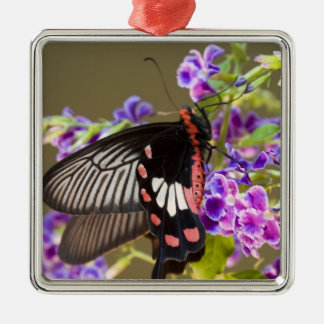 SE Asia, Thailand, Doi Inthanon, Papilio Silver-Colored Square Decoration