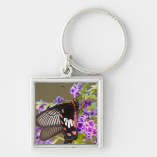 SE Asia, Thailand, Doi Inthanon, Papilio Silver-Colored Square Key Ring