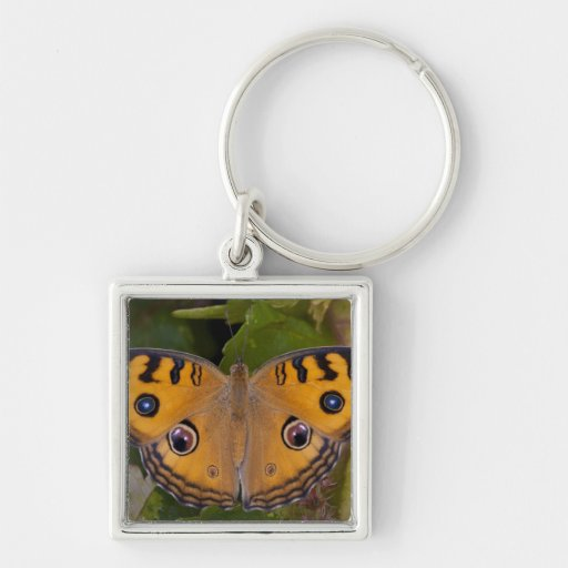 SE Asia, Thailand, Krabi, The Peacock Pansy Keychains