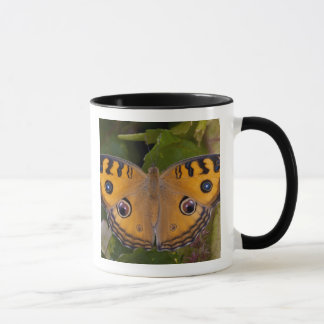 SE Asia, Thailand, Krabi, The Peacock Pansy Mug