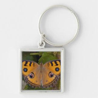 SE Asia, Thailand, Krabi, The Peacock Pansy Silver-Colored Square Key Ring