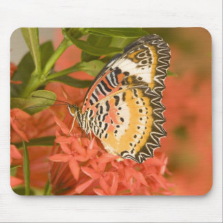 SE Asia, Thailand, Nam Nao National Park, The Mouse Pad