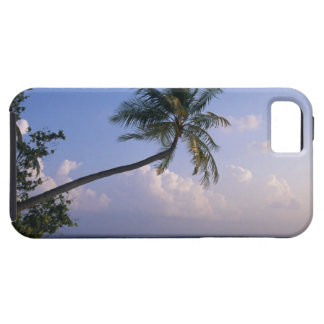 Sea and Palm Tree Case For The iPhone 5