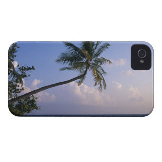 Sea and Palm Tree iPhone 4 Cover