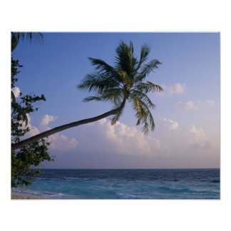 Sea and Palm Tree Poster