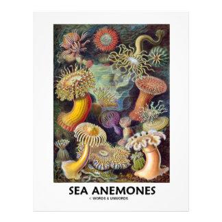 Sea Anemones 21.5 Cm X 28 Cm Flyer