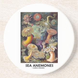 Sea Anemones Coaster