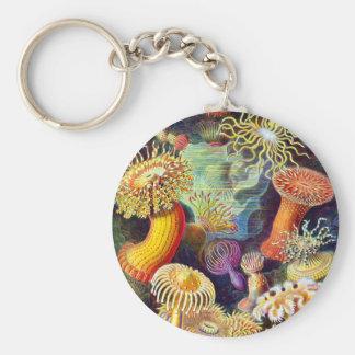 Sea Anemones Ernst Haeckel Fine Art Basic Round Button Key Ring