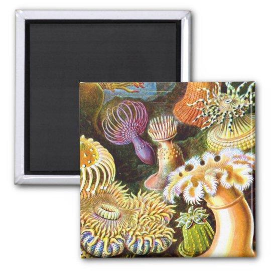 Sea Anemones Ernst Haeckel Fine Art Magnet