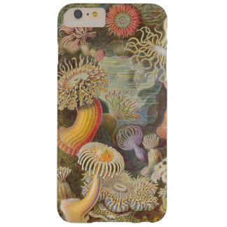 Sea Anenome by Ernst Haeckel Barely There iPhone 6 Plus Case