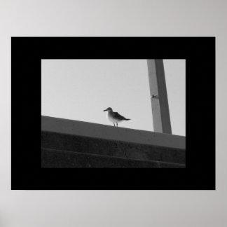 Sea Bird - Black White with Black Border Posters
