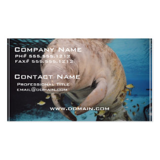 Sea Cow Swimming Business Card Templates