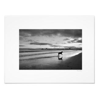 """Sea Dog 16""""x12"""" Photo Print"""