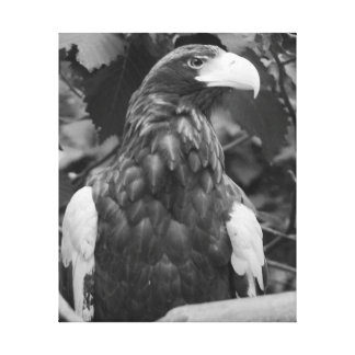 """Sea Eagle"" Canvas Print"