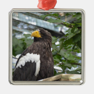 Sea Eagle Christmas Tree Ornaments