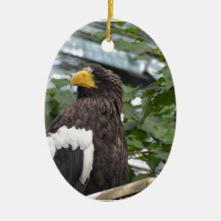 Sea Eagle Ornaments