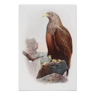Sea Eagle John Gould Birds of Great Britain Nature Poster