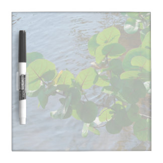 sea grape leaves over river plant florida nature dry erase boards