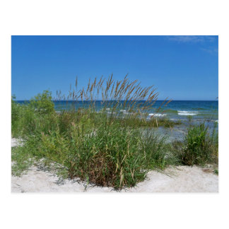 Sea Grass along the seashore Postcard