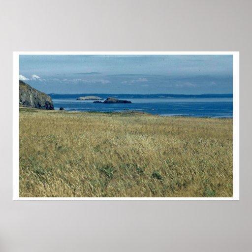 Sea Grassland Poster