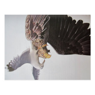 Sea gull and eagle postcard