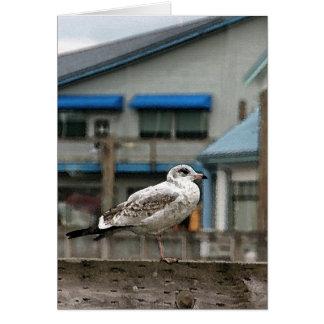 Sea Gull Card