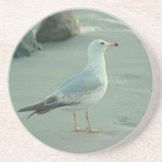 Sea Gull Coaster