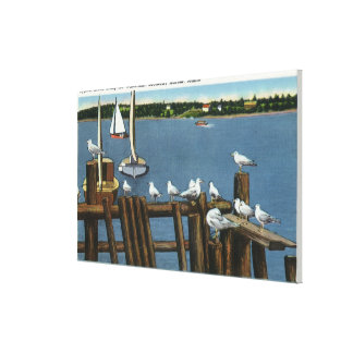 Sea Gulls and Sailboats Along the Waterfront Canvas Print