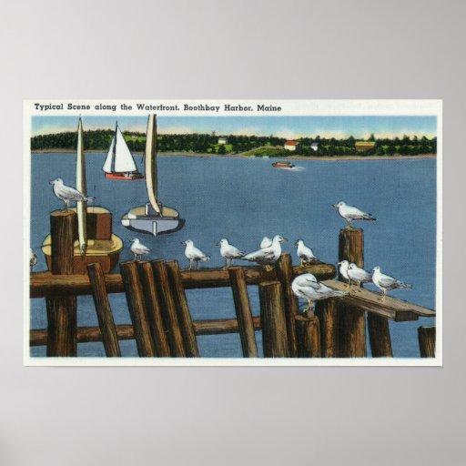 Sea Gulls and Sailboats Along the Waterfront Poster
