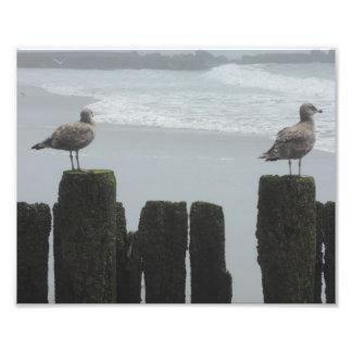 Sea Gulls at Watch Photo Print