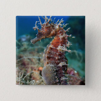 Sea Horse | Hippocampus Ramulosus 15 Cm Square Badge