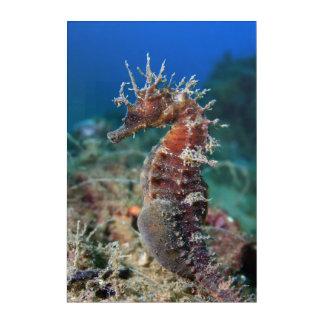 Sea Horse | Hippocampus Ramulosus Acrylic Print