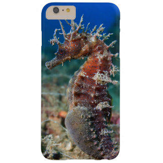 Sea Horse   Hippocampus Ramulosus Barely There iPhone 6 Plus Case