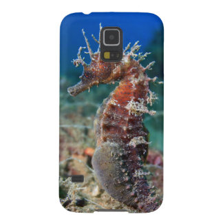 Sea Horse | Hippocampus Ramulosus Case For Galaxy S5