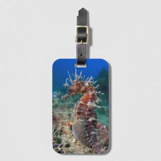 Sea Horse   Hippocampus Ramulosus Luggage Tag