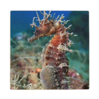 Sea Horse   Hippocampus Ramulosus Wood Coaster