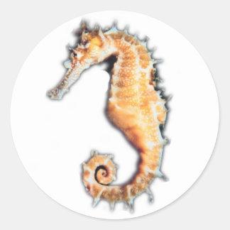 Sea horse stickers