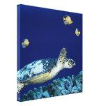 Sea Life Sea Turtle Canvas Print Canvas Prints