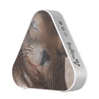 sea-lion-113.jpg
