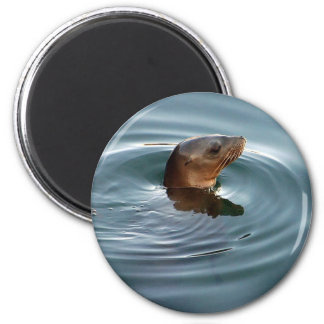 Sea Lion At Play 6 Cm Round Magnet