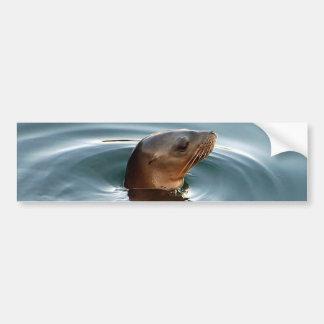 Sea Lion At Play Bumper Sticker