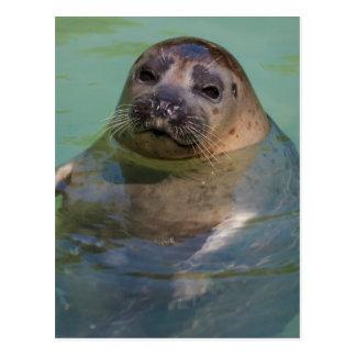 sea lion at the zoo postcard