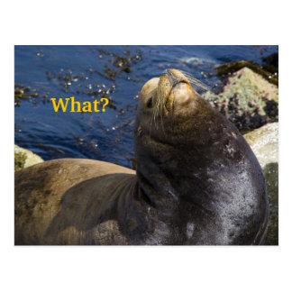 Sea Lion Attitude Post Cards