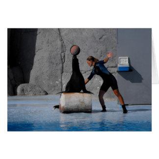 Sea lion balancing ball in Spain Greeting Card