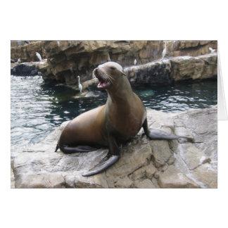 sea lion barking greeting cards