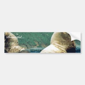 Sea Lion Bull Car Bumper Sticker