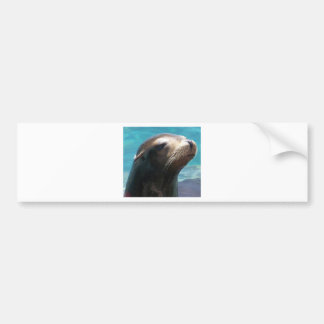 Sea Lion Car Bumper Sticker