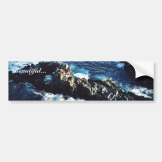 Sea Lion Bumper Stickers